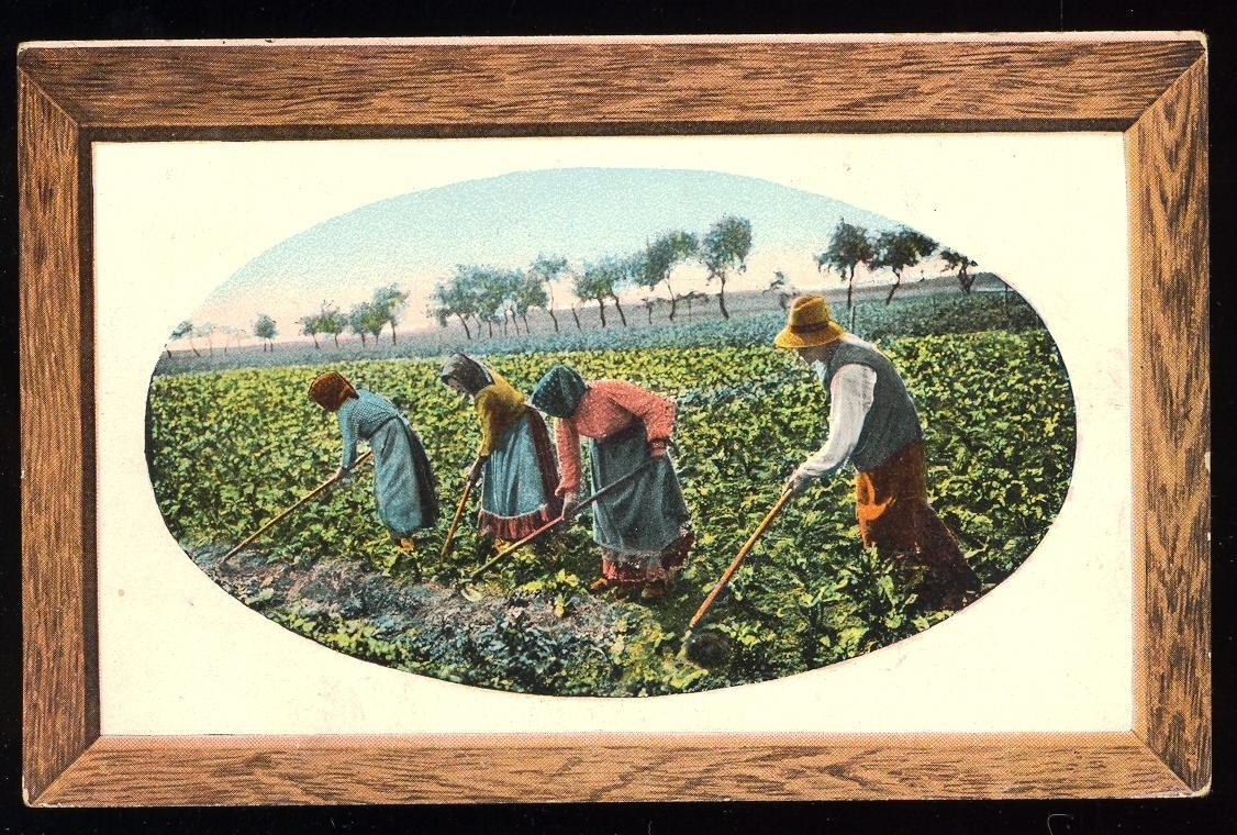 Stamps with Agriculture from Netherlands (image for product #950021)